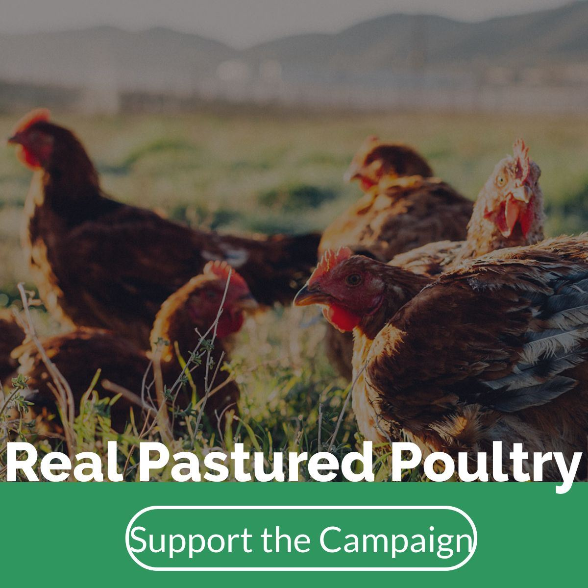 pastured poultry marketing campaign